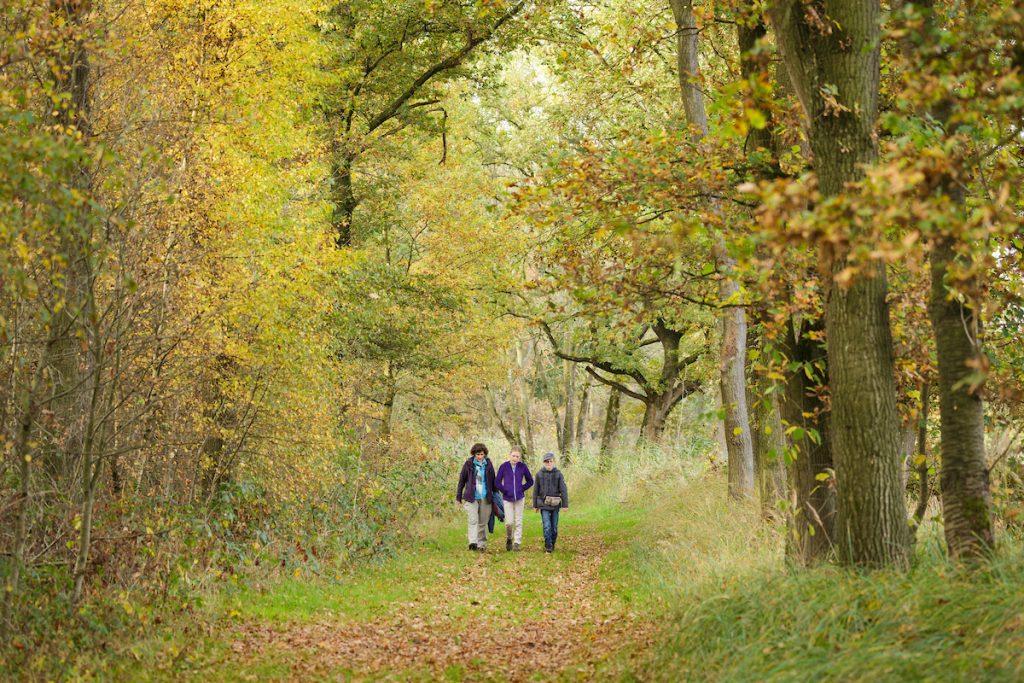 Wandelaars in een bos in de herfst.
